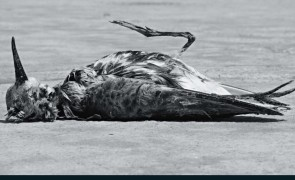 Audubon_July-August2013_Migration_JanQui